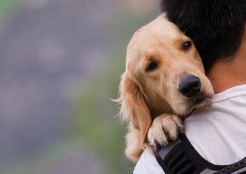 ТЕРЕМОК. Чему нам стоит поучиться у собак