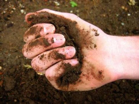 Как понять, какая почва у вас на участке