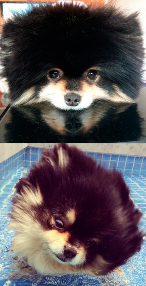 До и после ванны: 25 смешных…