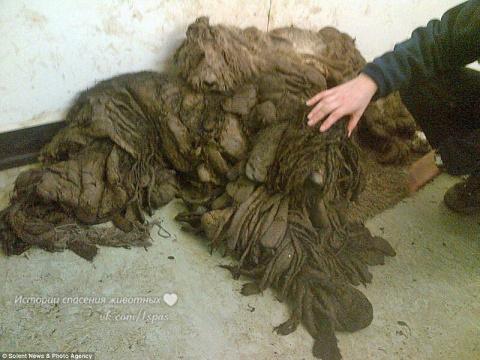 Это не куча мусора, а два пса