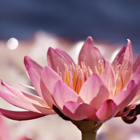 Нежные цветочные фото Kim Hojnacki