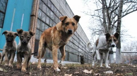 Донецк – как избежать единоразовой доброты