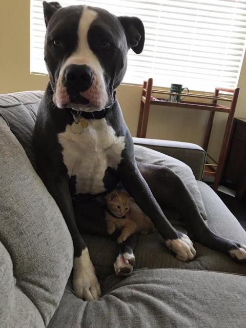 17 собак, чьи поступки верну…