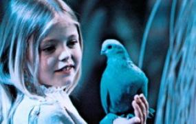 Говорят что за эти годы Синей птицы пропал и след....