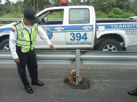 Как эквадорская полиция лени…