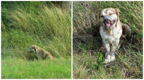 В канаве нашли живого пса со…