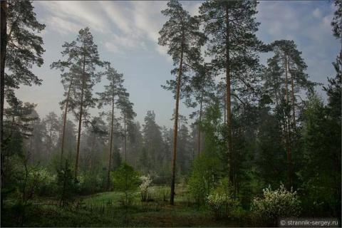 Романтичная прогулка в волшебную страну туманным утром весной