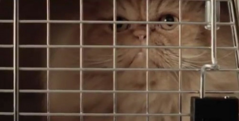 Жутковатая любовь кота к Toyota Corolla