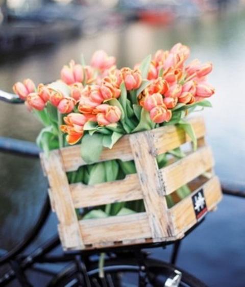 Посадка тюльпанов осенью — когда и как сажать луковицы