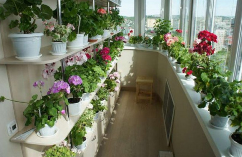 Шикарный цветник дома — это …
