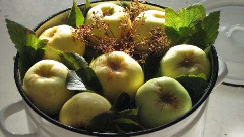 Старинных русские рецепты моченых яблок
