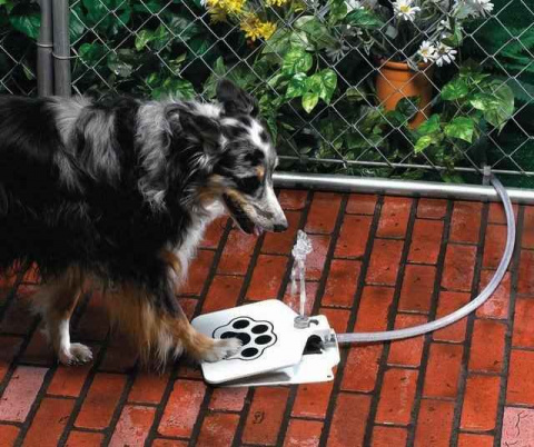 Персональный фонтан для собаки