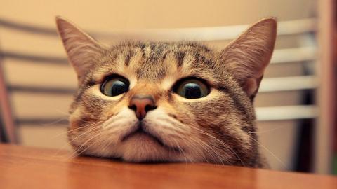 14 невероятных секретов, кот…