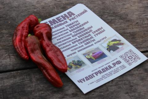 Наш урожай: перец Мелроуз