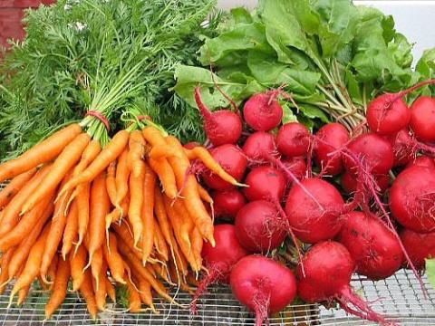 Чтобы свекла и морковь были сладкими