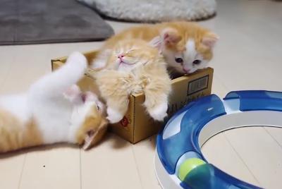 Играющие котята – такие лапо…
