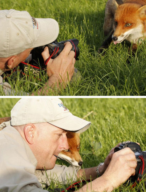 20 смешных животных, которые в прошлой жизни были фотографами
