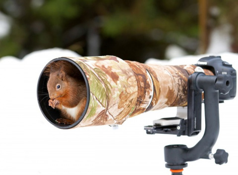 Животные, которые знают, как правильно фотографировать