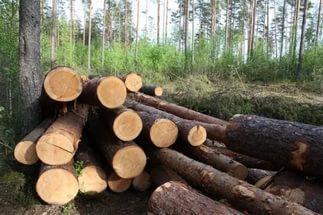 Двое жителей Карелии вырубили лес ради плетеных корзинок