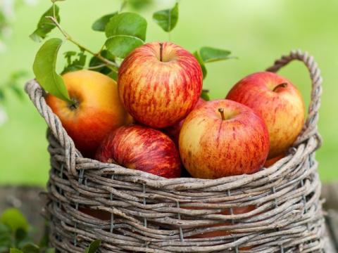 Как не потерять урожай яблок в плодородный год