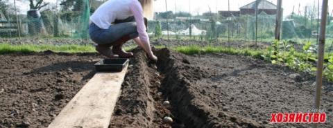 Секреты посадки картофеля, о которых вы еще ничего не знали