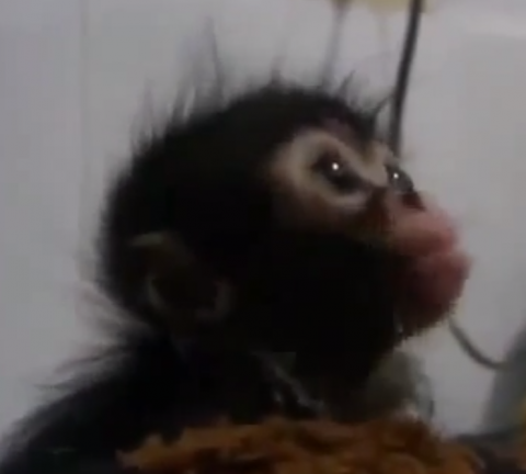 Самые смешные животные (видео)