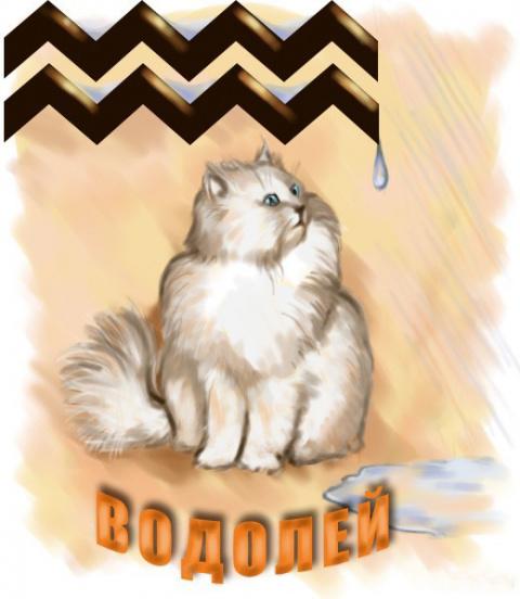 Кошачий гороскоп. Кошка Водолей