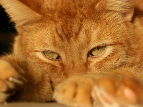 История одного доброго кота ..  С любовью к братьям нашим меньшим...