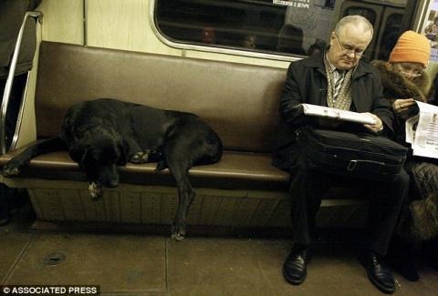 Собаки, которые ориентируются в московском метро не хуже людей