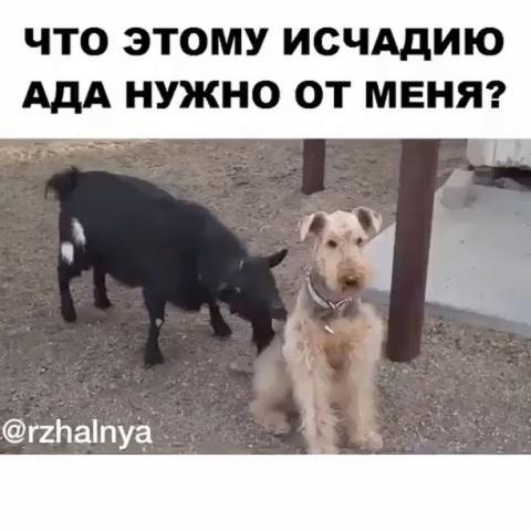 Прикол. Мастер игнора)))