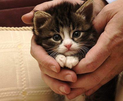 Когда в доме появился котенок