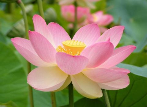Садовые цветы: 8 самых популярных и неприхотливых растений