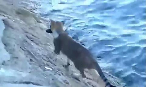 Кот-ловкач поймал рыбу