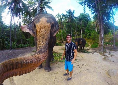 Слоны тоже любят селфи
