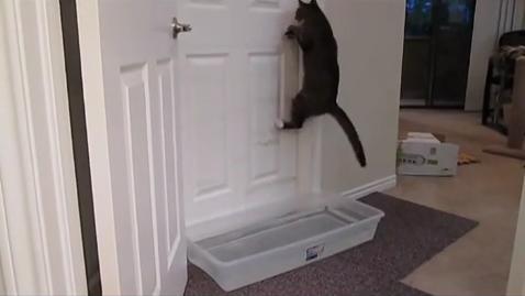 Кошку не проведешь!