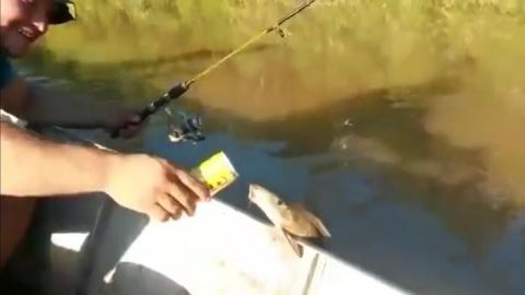 Как бразильские мужики напоили рыбу пивом