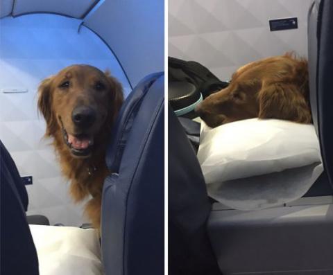 Лучшие пассажиры самолётов))