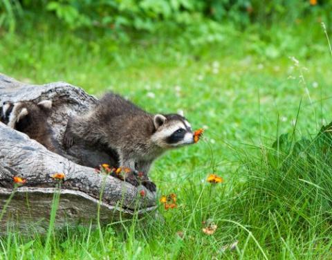 Очаровательные животные, нюх…