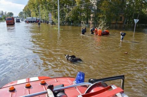 Помощь животным в затопленном Хабаровске