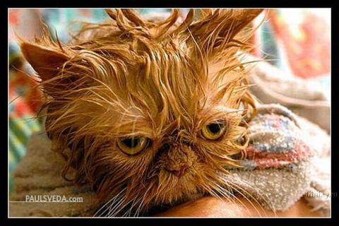 Мокрые коты — несчастные кот…