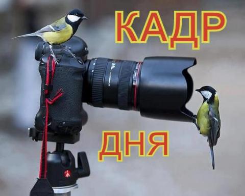 Кадр дня: Нападение козявки!))