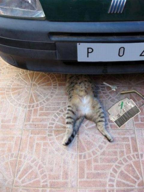 Котики и кошечки, которые вы…