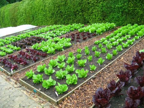 Микроклимат на вашем огороде…