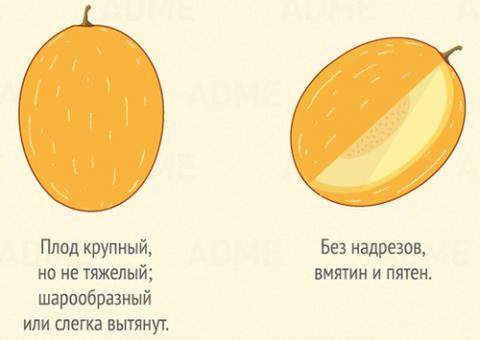 Как выбрать дыню