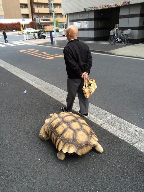 Как выгулять черепаху или самый терпеливый хозяин на свете