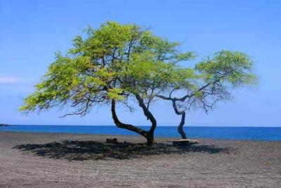 Гавайские острова (14 фото)