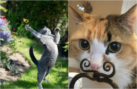 25 фотографий котов, сделанн…