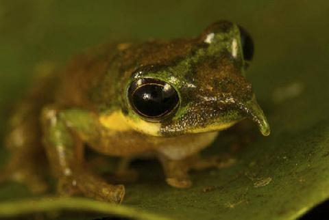 Новые виды животных в Индонезии (9 фото)