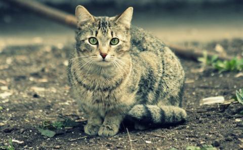 Как кошка Маша пошла на миро…