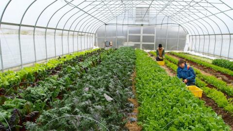 Мнение США: Экологически безопасное и мелкомасштабное производство сельскохозяйственной продукции в России может прокормить весь мир